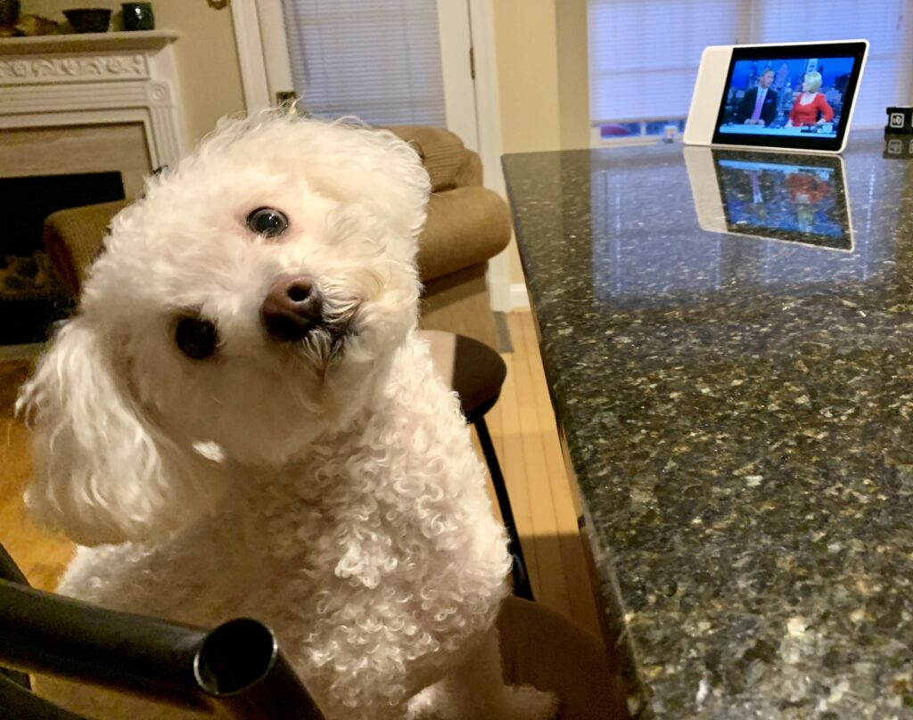 - Norm watching a smart display 1024x808 - Why the market for smart speaker apps can't possibly rival that of smartphones yet – Stacey on IoT